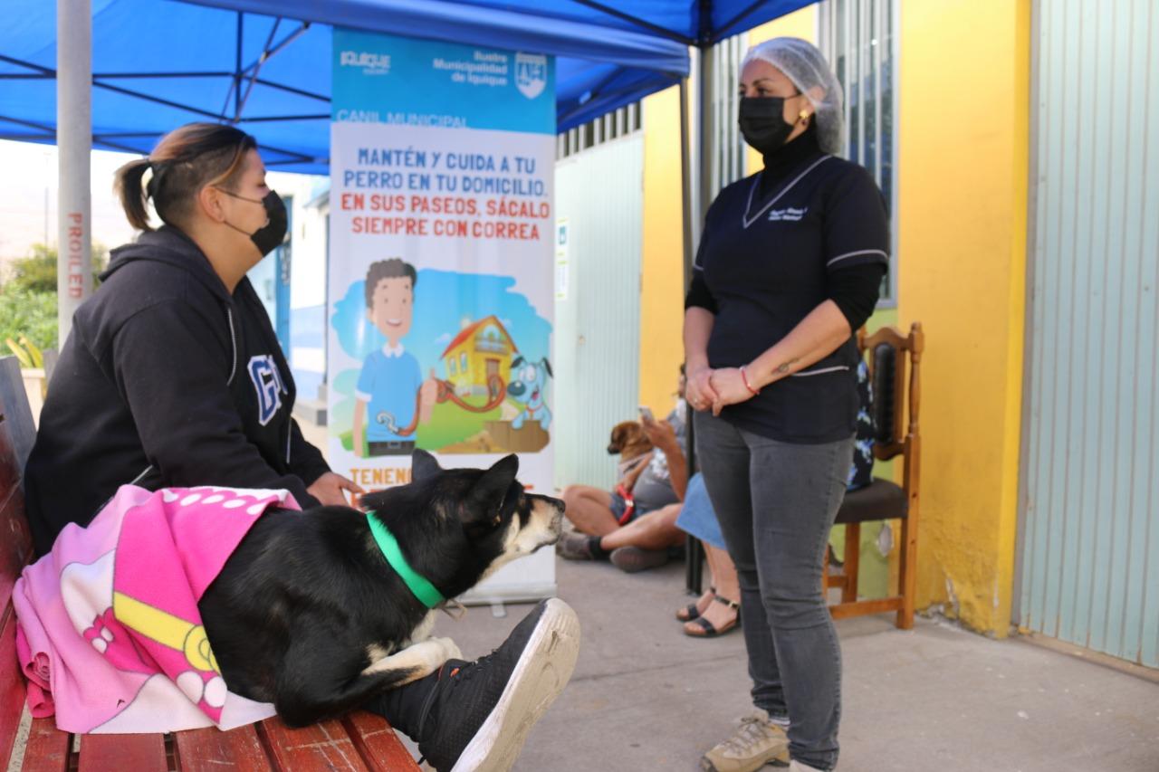 Iquique cuenta con más de 22.000 mascotas inscritas en el Registro Nacional